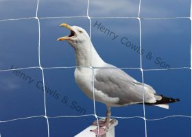 Knotted 75mm Seagull Netting